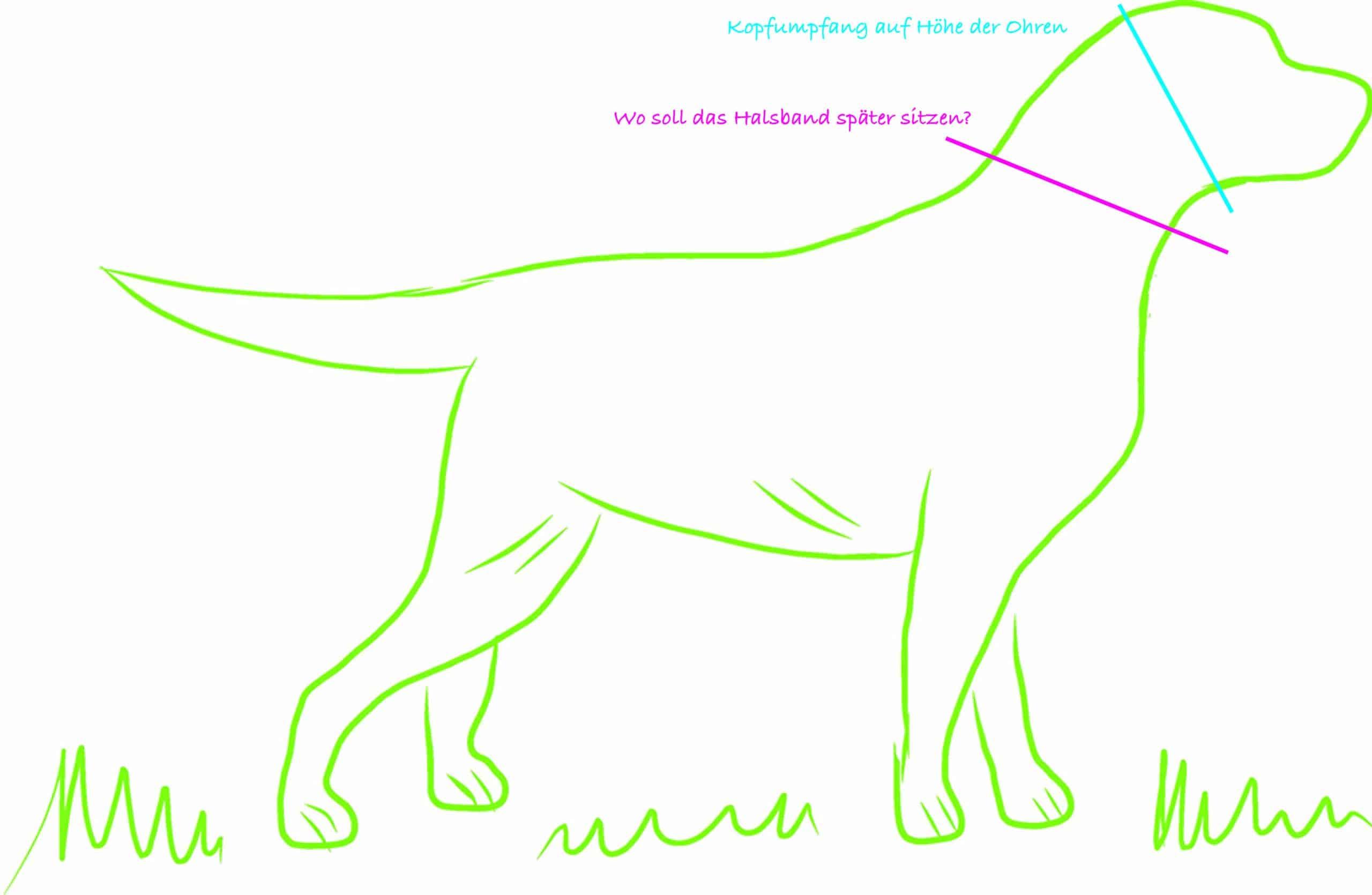 Wie messe ich den Halsumfang von meinem Hund?